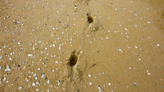 animal-footprints-in-beach-sand