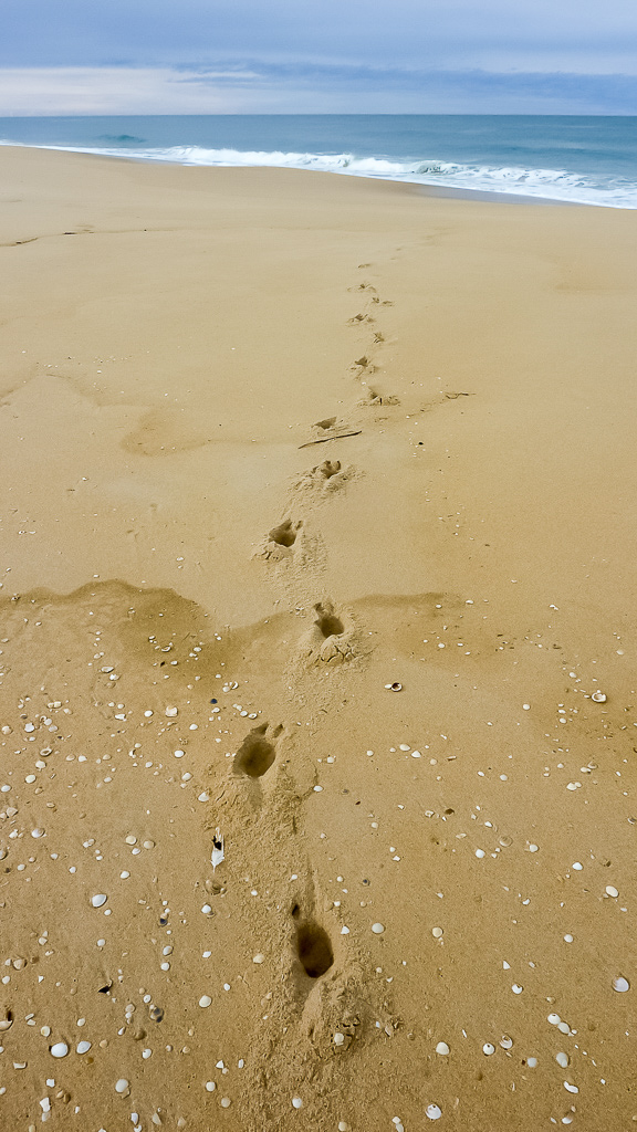 animal-footprints-in-sand-beach