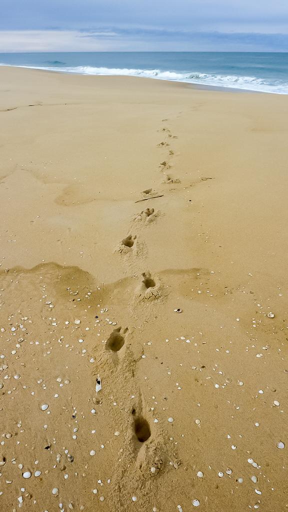 animal-footprints-in-sand-beach