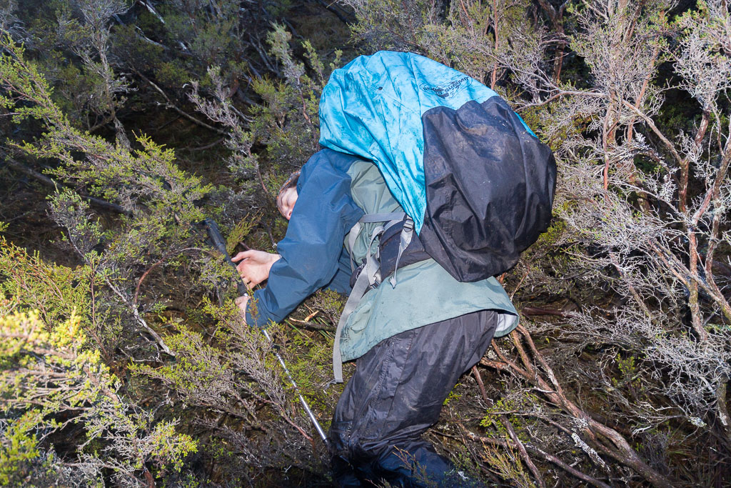 falling-into-tree-never-never-tasmania