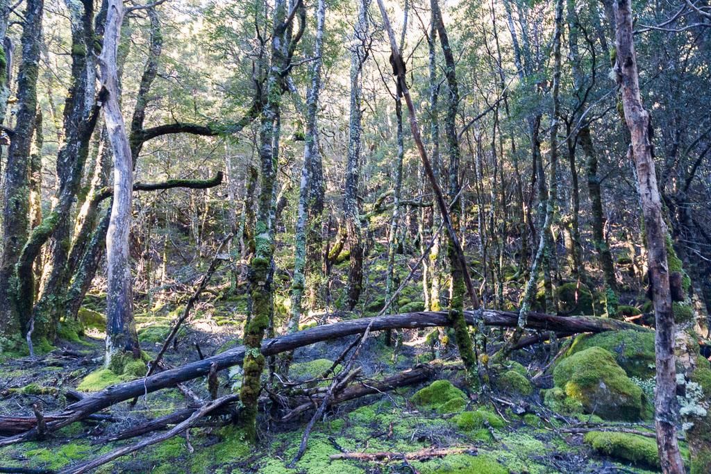 forest-never-never-tasmania