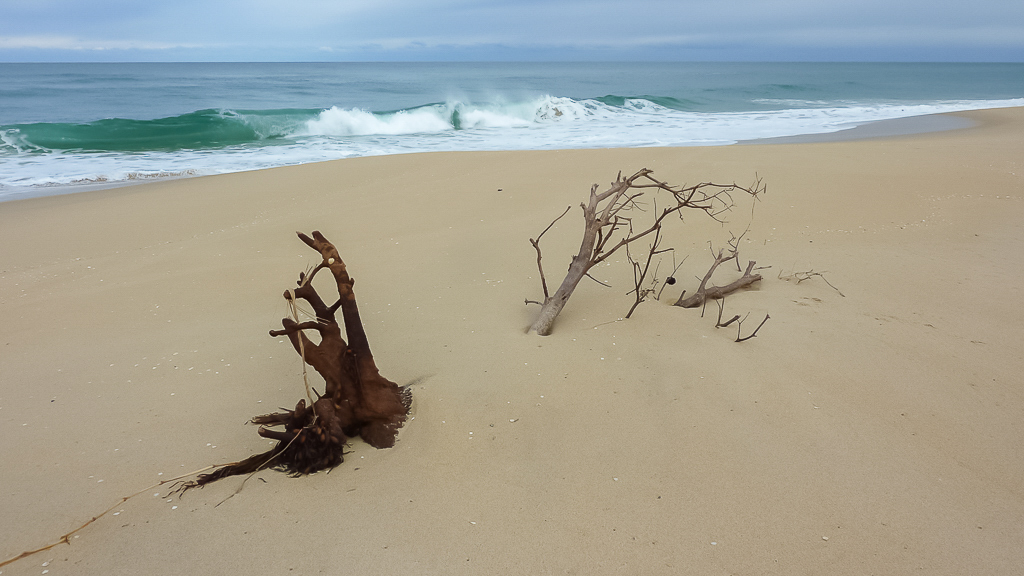 half-buried-trees-sand-beach