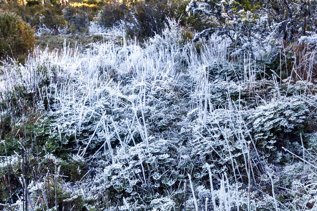 ice-grass-never-never-tasmania