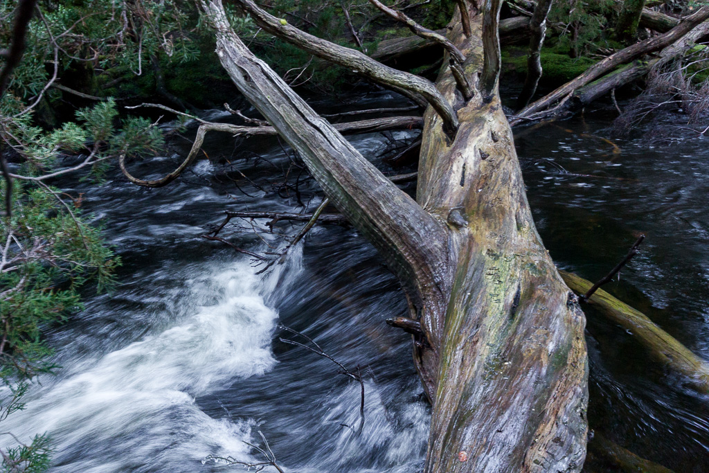 log-crossing-over-mersey-river-never-never-tasmania