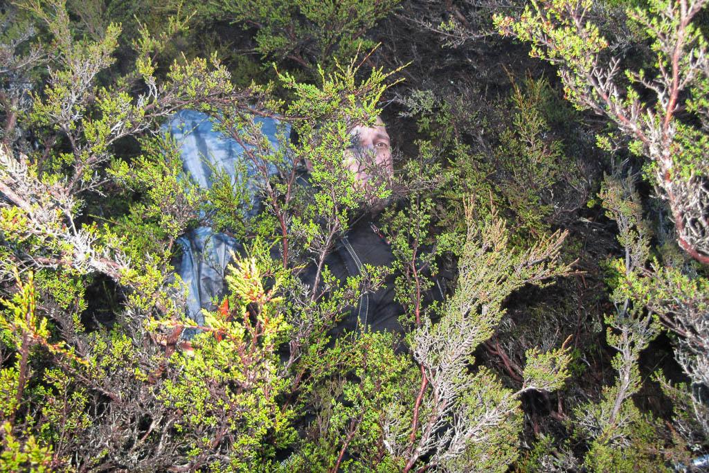 lying-in-tree-never-never-tasmania