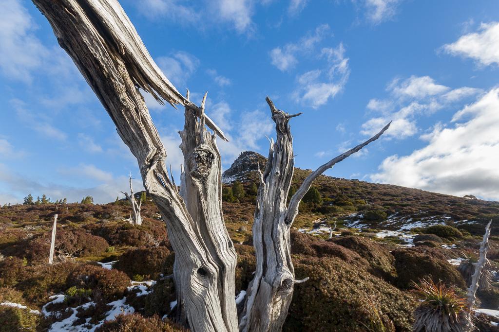 mount-ossa-dead-tree-overland-track