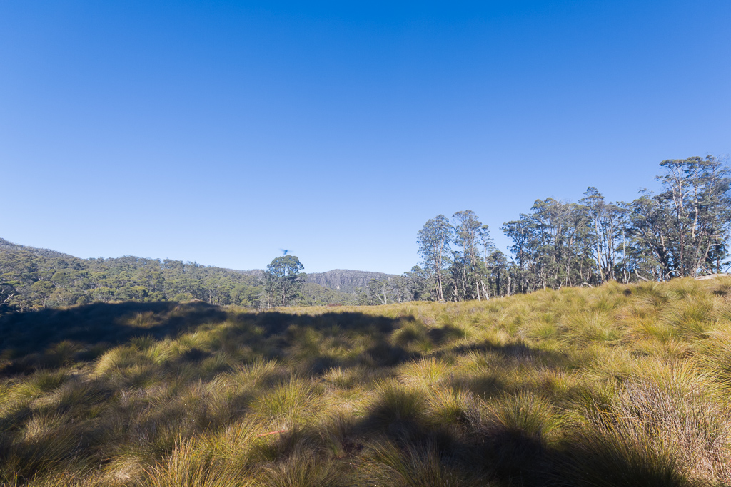 open-grass-never-never-tasmania