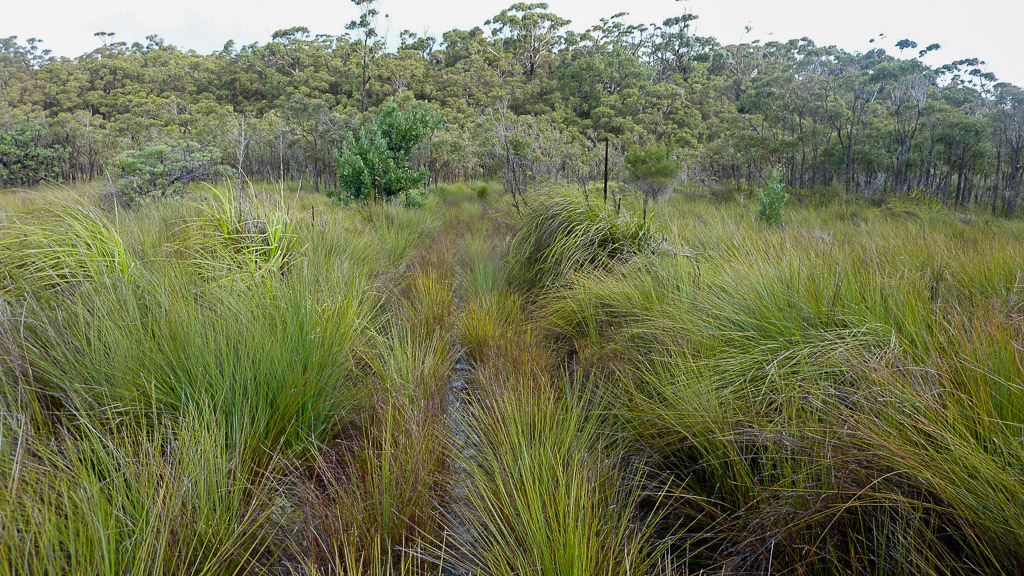 sandpatch-track-croajingolong-national-park