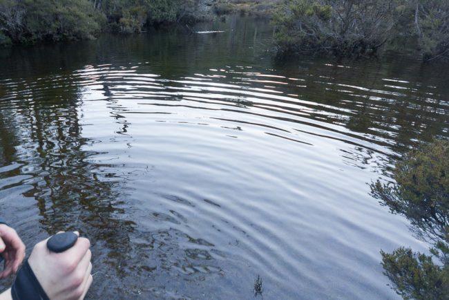 standing-in-water-never-never-tasmania