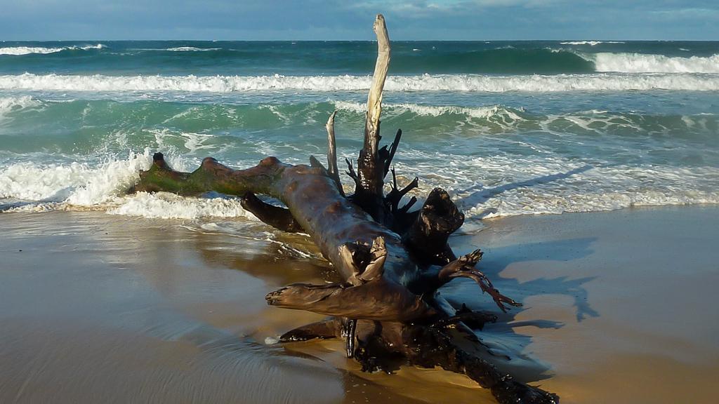 timber-in-waves-thurra-river-beach-croajingolong