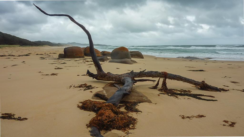 timber-on-beach