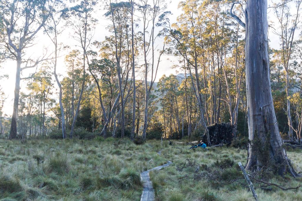 track-near-pelion-hut-overland-track