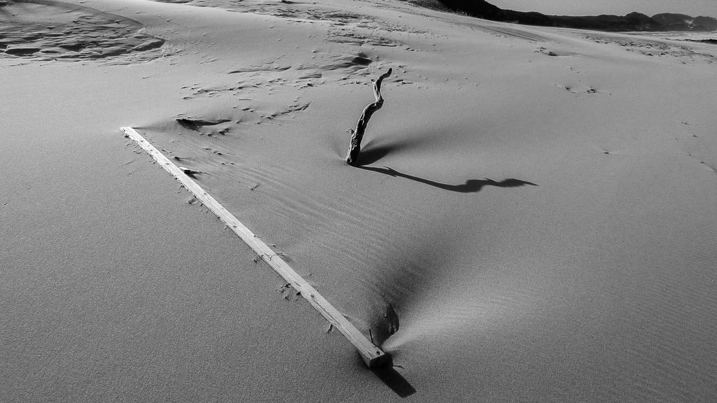 tree-buried-sand-croajingolong-national-park