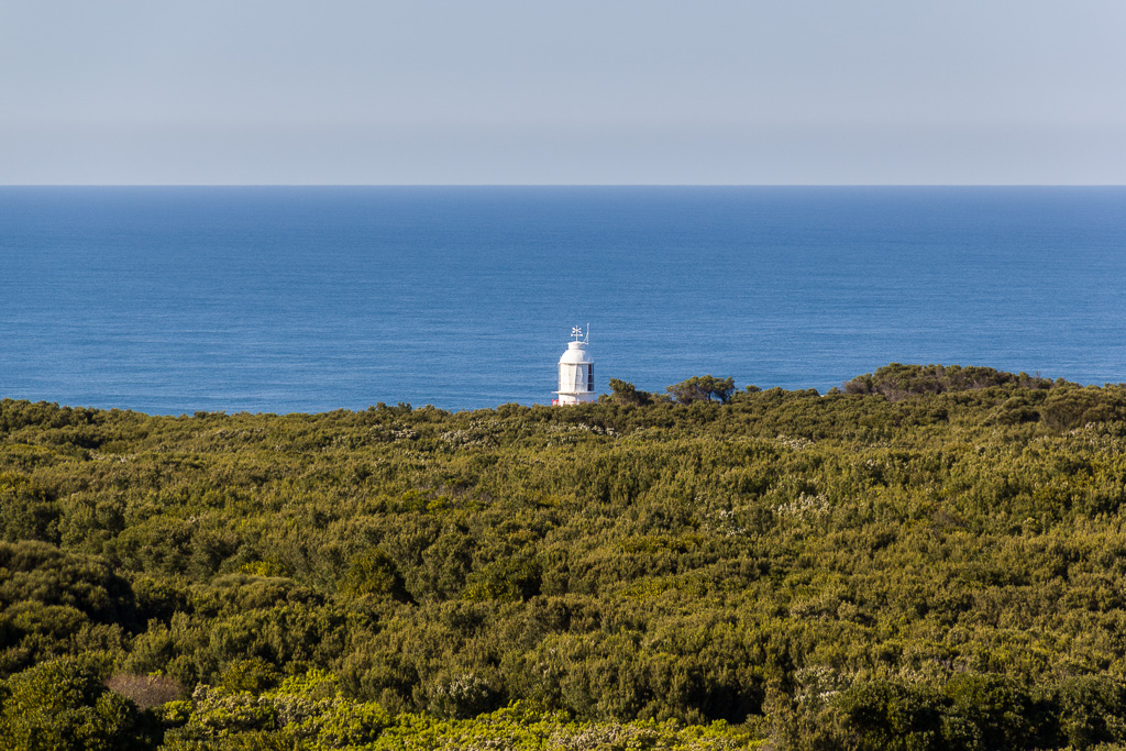 cape-otway-lighthouse-above-trees