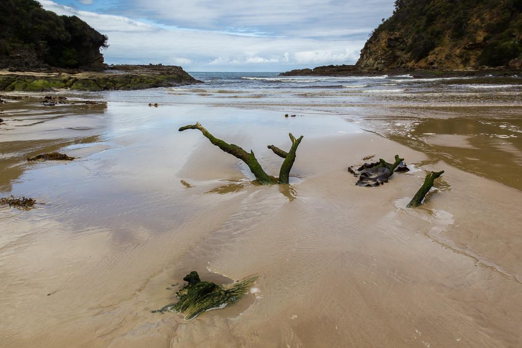 tree-strump-in-sand-parker-river-inlet