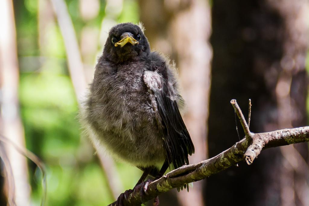 bird-on-branch-otways