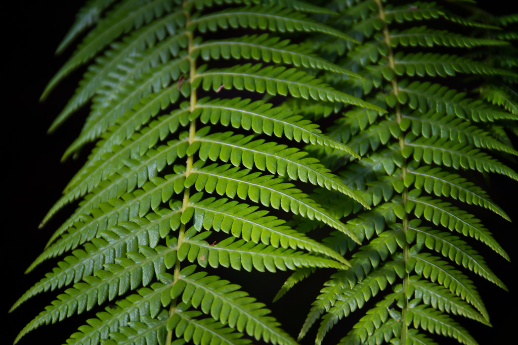 ferns-otways