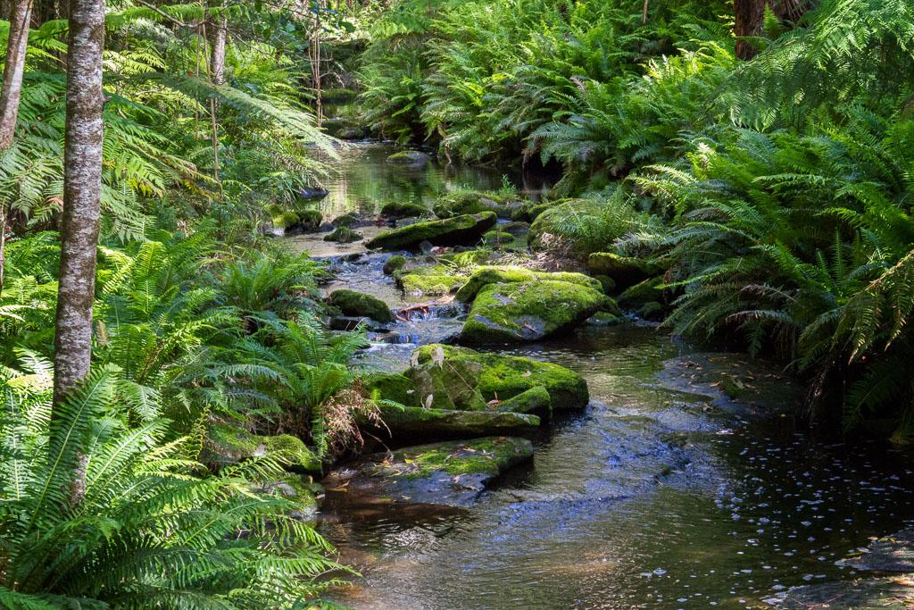 sheoak-creek-otways