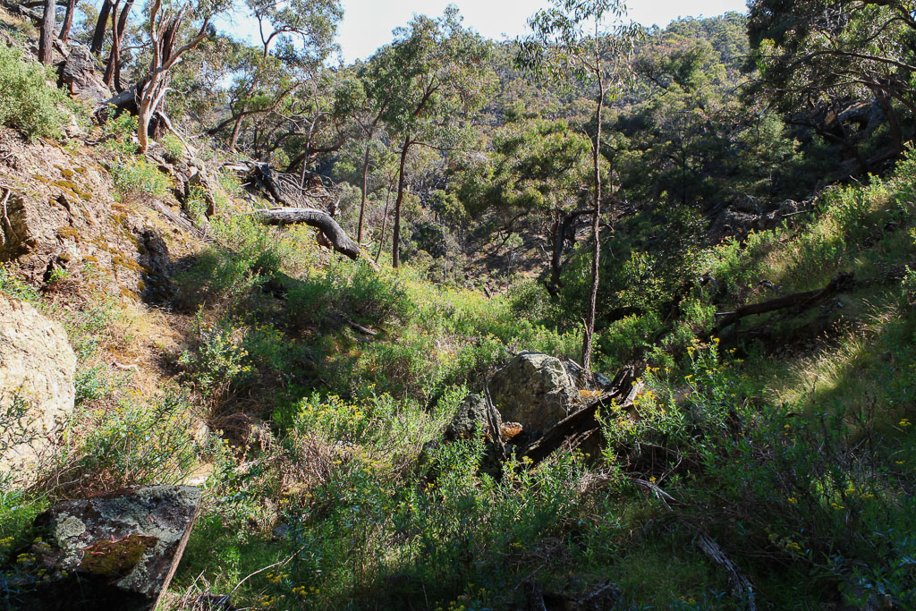 bush-ironbark-gorge-werribee-gorge