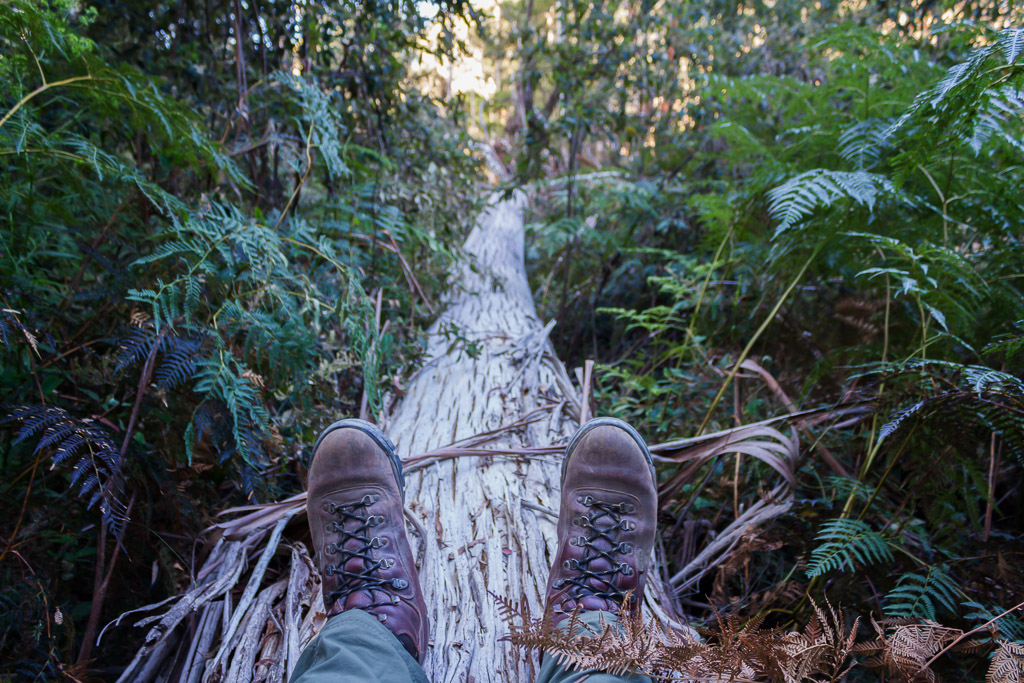 climbing-over-fallen-tree-lerderderg-gorge