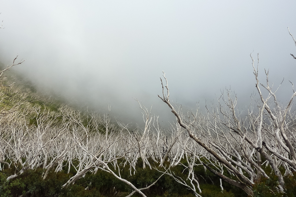 clouds-in-trees-mount-feathertop