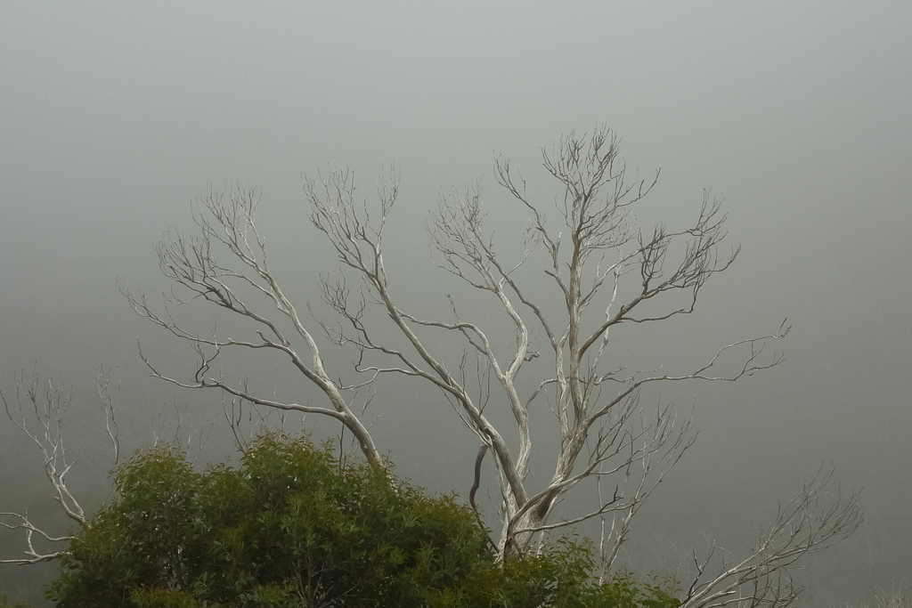 clouds-trees-mount-feathertop