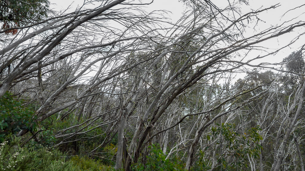 leaning-trees-bungalow-spur-victoria