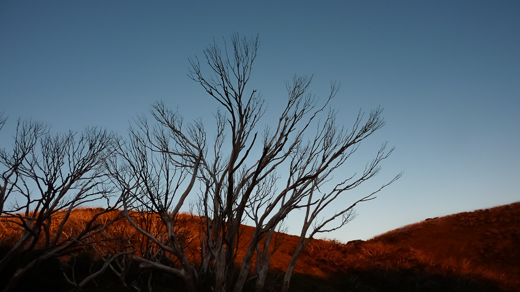 red-sunset-light-in-trees-mount-feathertop
