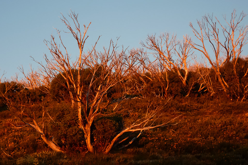 red-sunset-trees-mount-feathertop