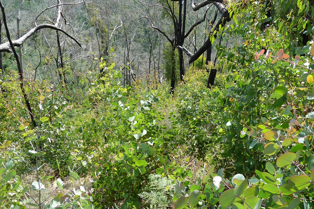 regrowth-near-strath-creek-mount-disappointment-state-forest