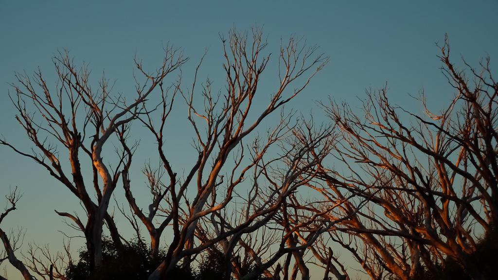sunset-light-in-trees-mount-feathertop