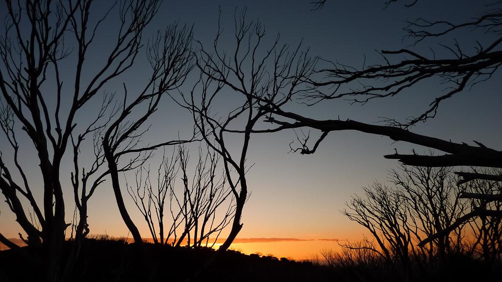 sunset-trees-mount-feathertop