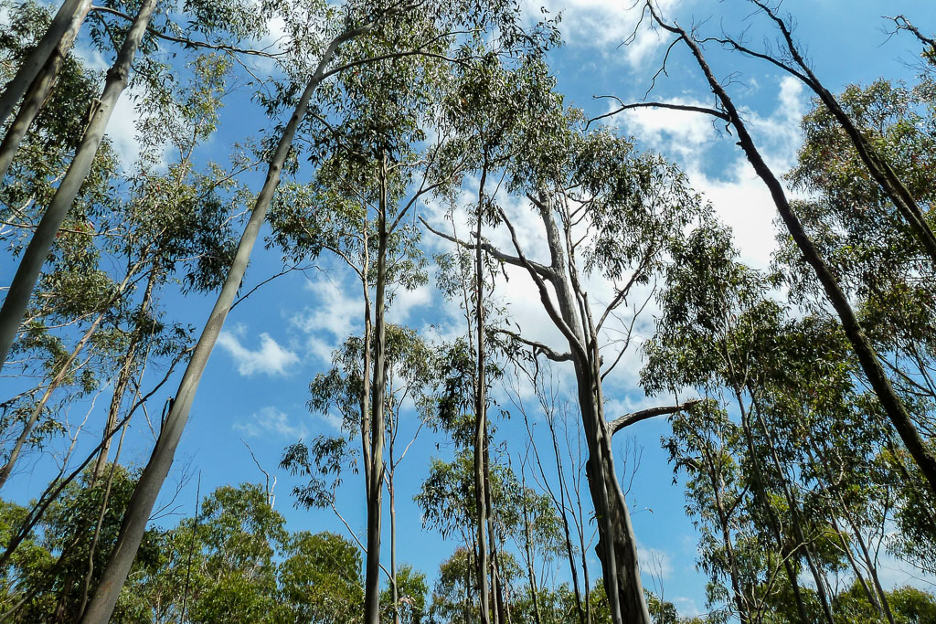 trees-below-mount-macedon