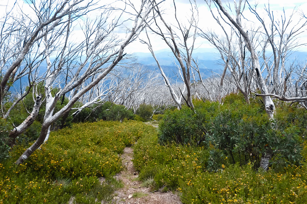 trees-walking-track-bon-accord-spur