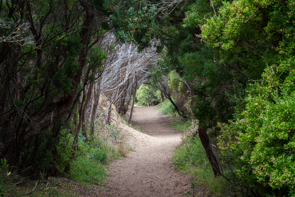 tunnel-of-tea-tree-cape-schanck