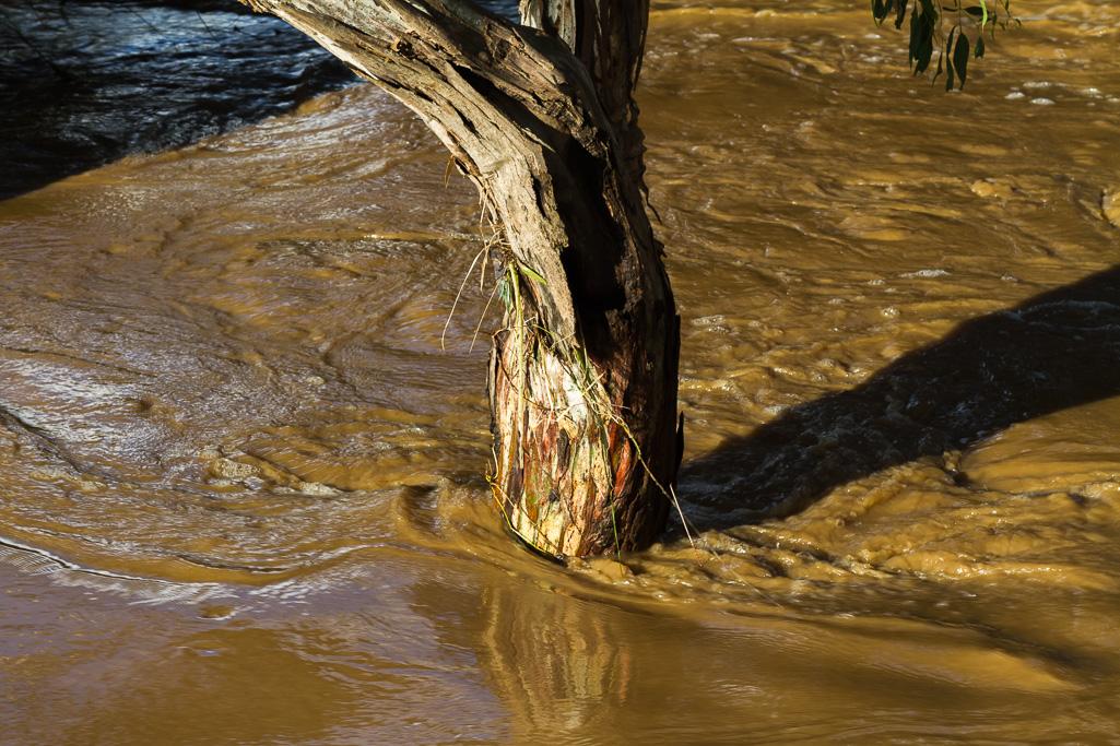 water-around-gum-tree-flood-werribee-river