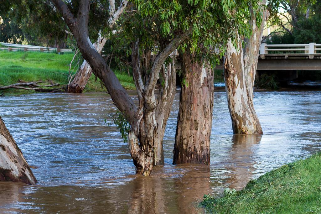 water-flood-trees-werribee-river