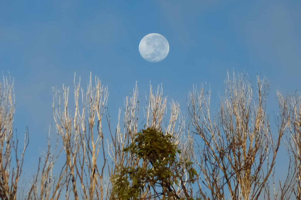 moon-above-trees-near-mount-bogong