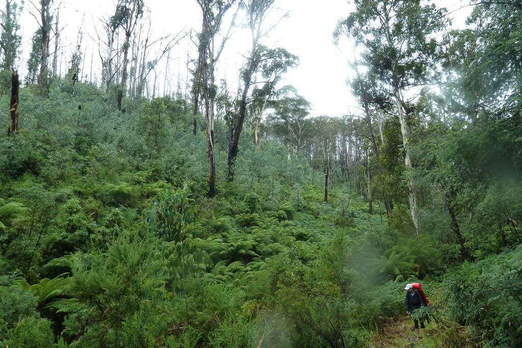 rain-climbing-eskdale-spur-mount-bogong