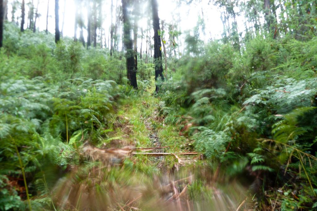 rain-eskdale-spur-mount-bogong