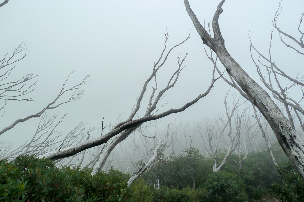 trees-in-clouds-mount-bogong
