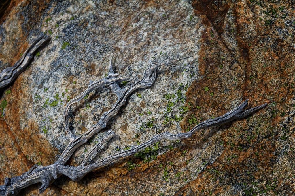 branches-against-orange-rock
