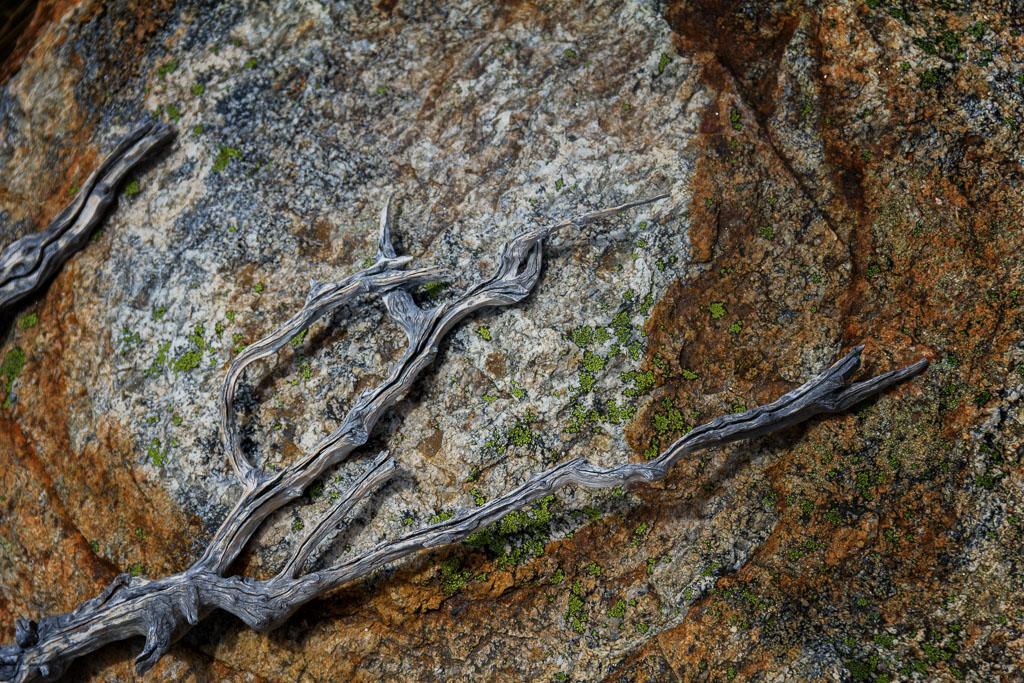 branches-against-orange-rock