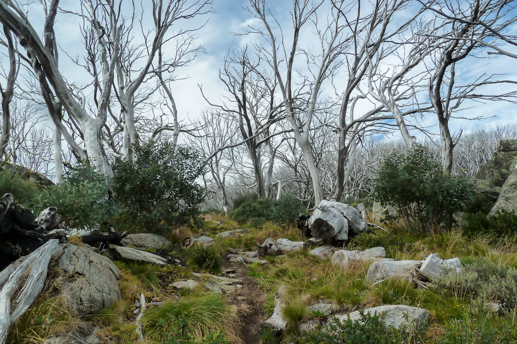 dead-trees-dead-horse-gap-track-snowy-mountains