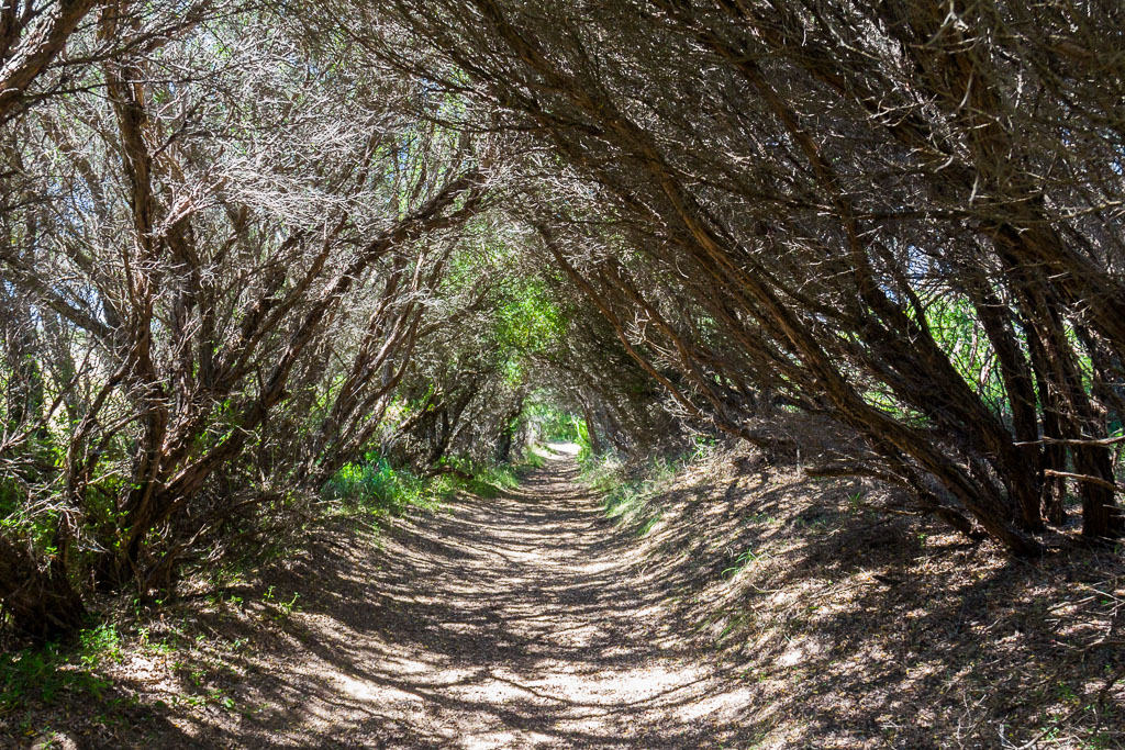 tunnel-of-tea-tree