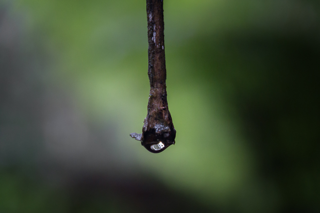 water-droplet-twig