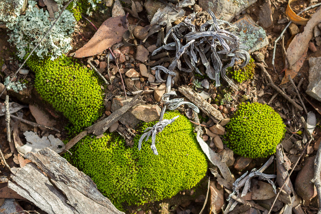 moss-on-ground-werribee-gorge