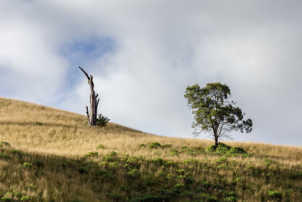 tree-on-hill-side-the-island