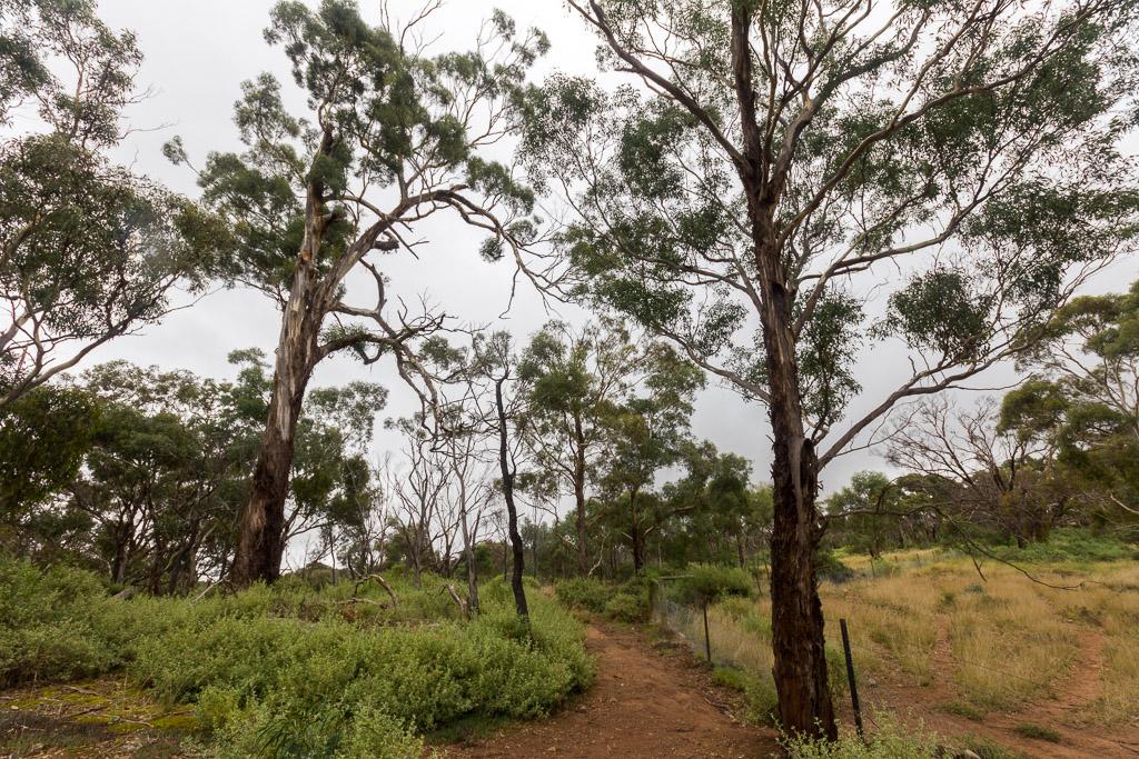 walking-track-werribee-gorge