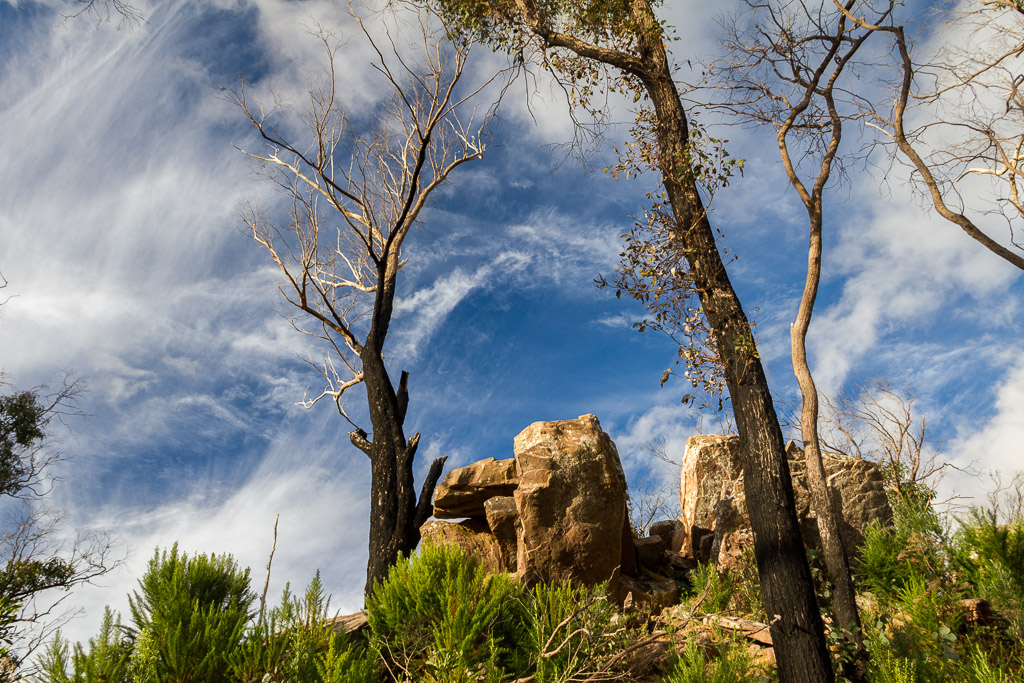burnt-trees-rocks-razorback-cathedral-ranges